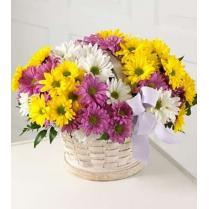 Корзинка с разноцветными хризантемами