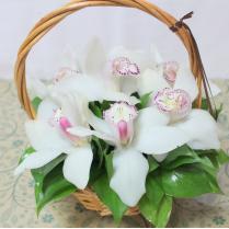 Корзина с белыми орхидеями (7шт)
